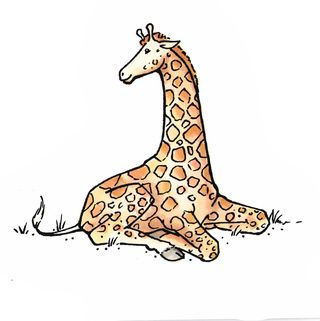 Liz Next Series Class 2 Giraffe Aug12